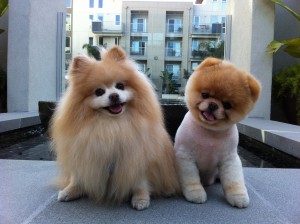 Yes, these dogs are real. So is your uncontrollable urge to kick them off that ledge.