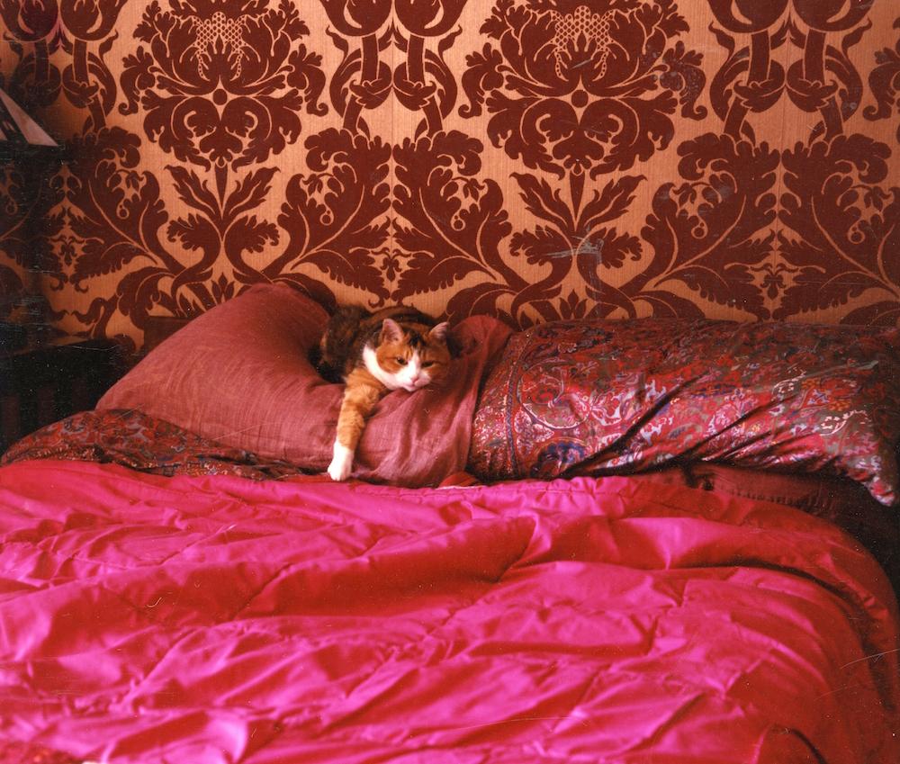 Peggy Nolan, born 1944 Untitled (cat judy's bed), 2013