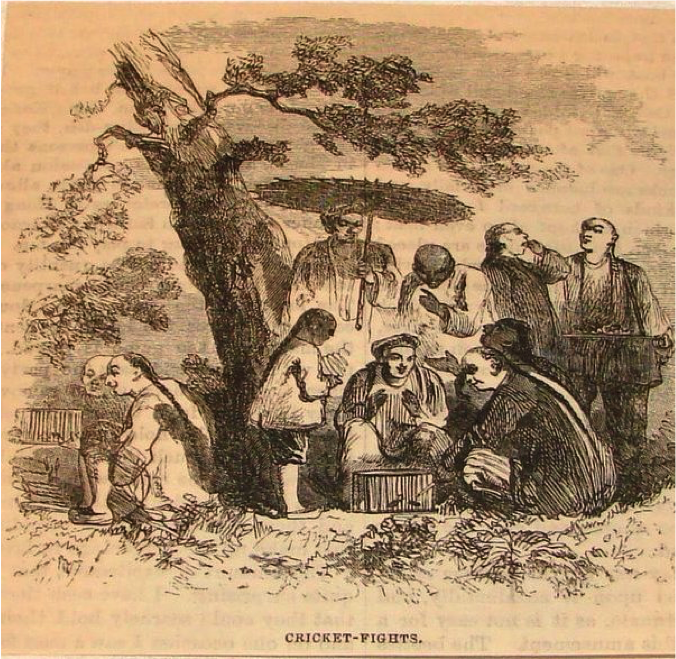 An 1879 engraving of cricket fights in China.