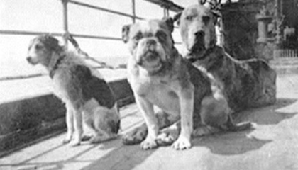 Dogs on board the Titanic. Lizzie's dog may be the largest one.